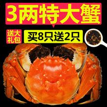 【买8送2】大闸蟹鲜活螃蟹2.8-3.0两 公母随机清蒸河蟹10只礼盒装