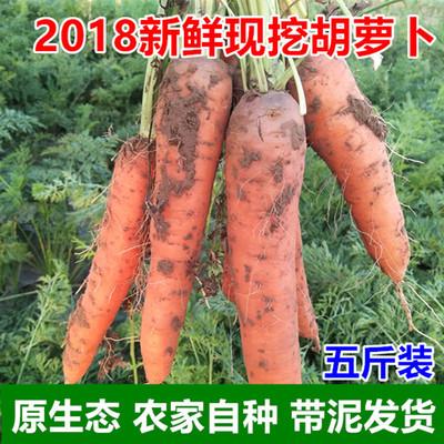 2018年新鲜胡萝卜 红萝卜农家蔬菜现挖现发胡萝卜带泥5斤包邮