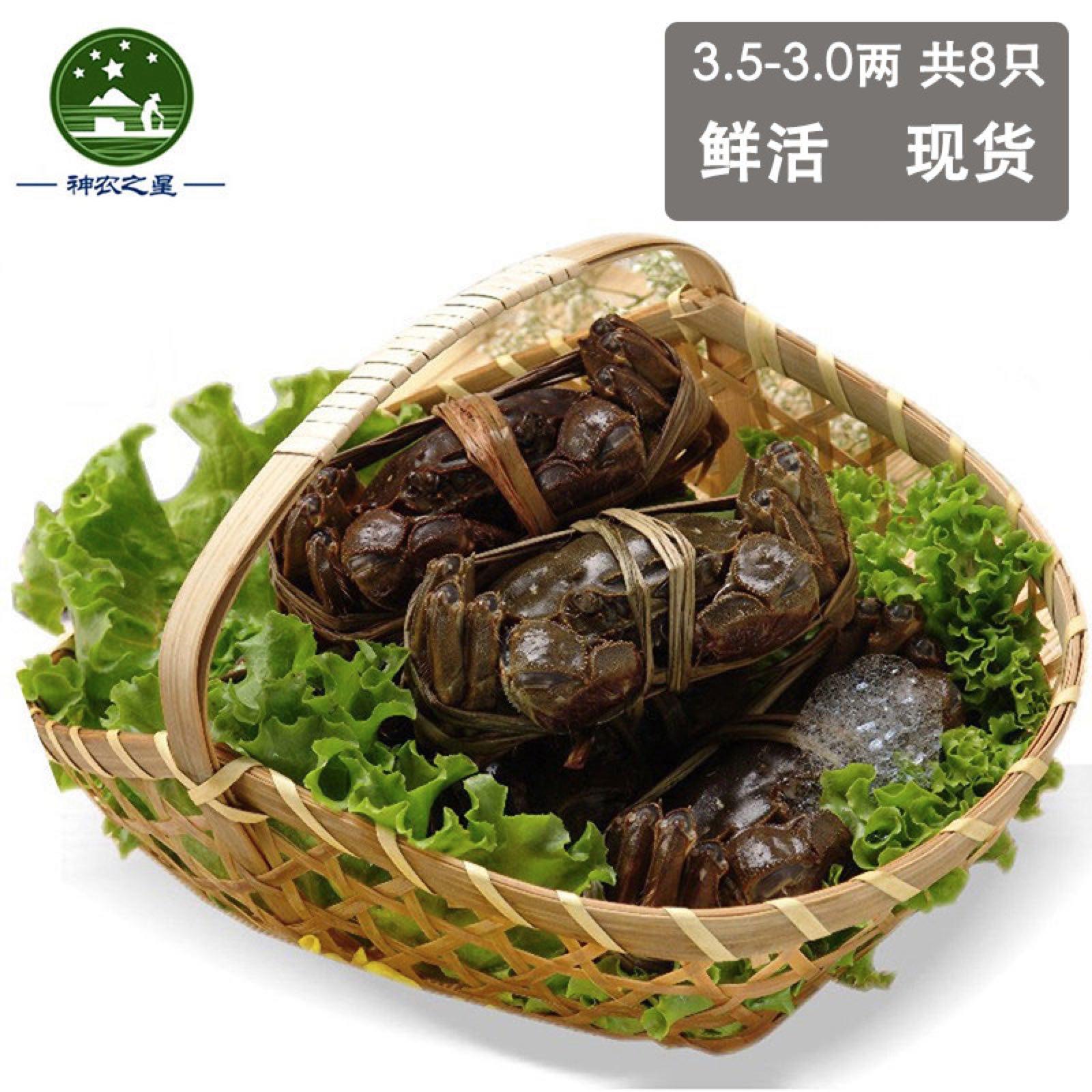 现货六月黄大螃蟹8只装大闸蟹 3.5-3.0 鲜活 原产地全母螃蟹