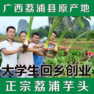 【天天特价】5斤装正宗广西荔浦芋头 槟榔芋新鲜农家自种香芋包邮