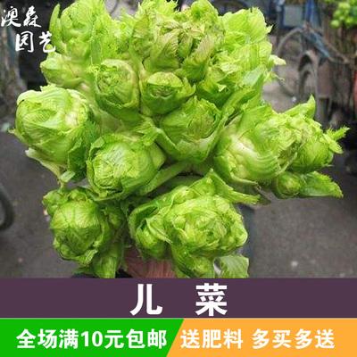 儿菜蔬菜种子菜籽种阳台种菜大全菜种籽?#22839;?#20892;家特色菜心特大脆甜