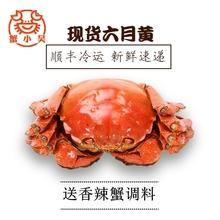 现货蟹小吴六月黄鲜活大闸蟹2.4-2.6两 螃蟹6只 小蟹农蟹业