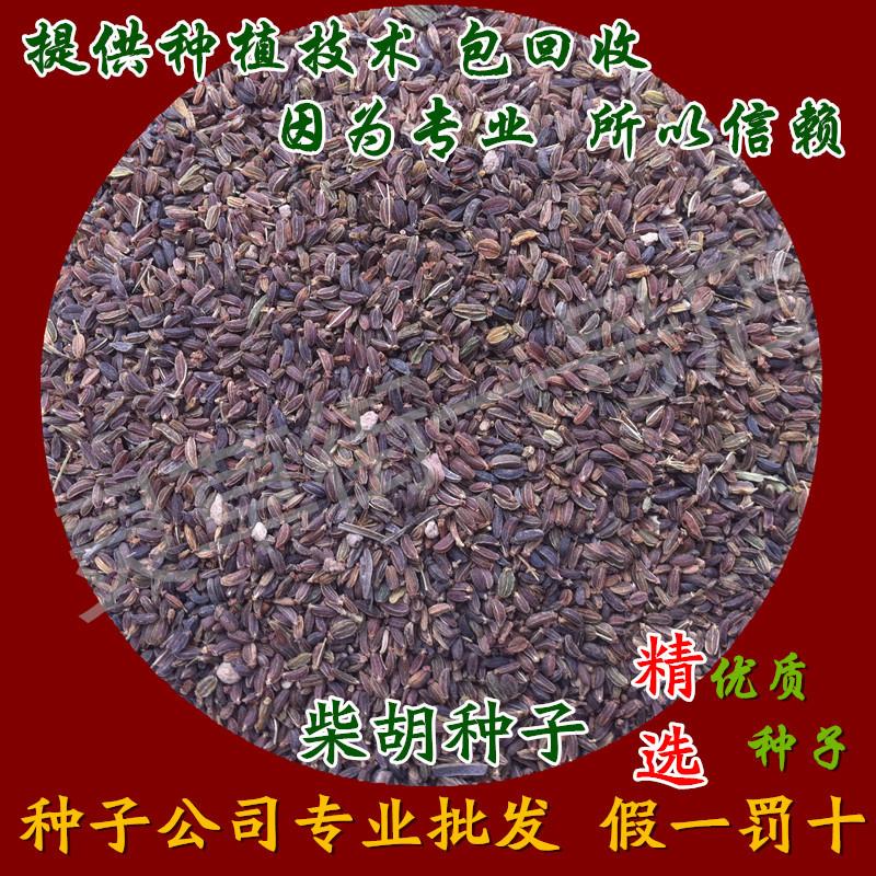 2017新黑柴胡籽种子中药材柴胡种子野生 黑柴胡  药材种子