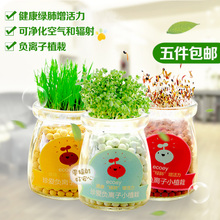 创意礼品水培盆景办公桌植物室内小盆栽学生礼品盆栽花卉生态瓶