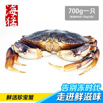 【海猛】加拿大活珍宝蟹 黄道蟹 肉质饱满 口感好 700g左右一只