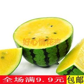 蔬果西瓜种子黄心早熟黄金宝 黄金凤阳台盆栽早熟黄壤西瓜籽