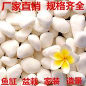 白色鹅卵石白色小石子石头雨花石花盆装饰品铺路白石子装饰石石头
