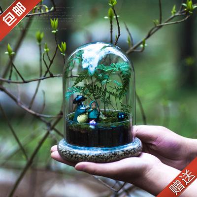 带罩玻璃龙猫苔藓微景观植物盆栽创意礼品生态瓶生日海藻球diy