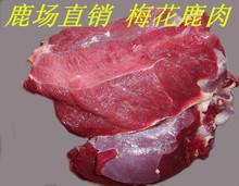 鹿场直销新鲜梅花鹿肉速冻保鲜发货5斤起拍送炖肉料