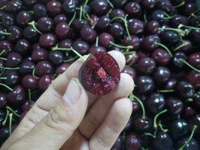 春城果园长春同城现货包邮智利JJJ级车厘子进口大樱桃新鲜水果5斤