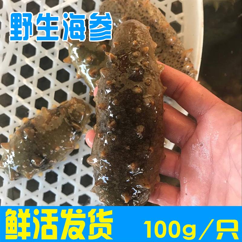 新鲜海参野生刺参高压即食高品质海参鲜活海鲜全场5只包邮