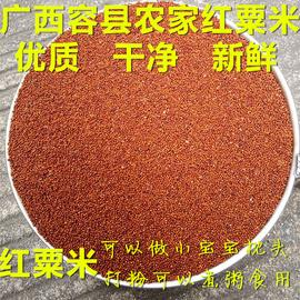 广西特产鸭脚粟龙爪粟  鸡爪粟 拳头栗 红粟米掺子5斤39元包邮图片