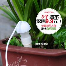 新品 办公室虹吸自动浇花器多肉植物浇水器滴灌设备陶瓷施肥渗水器