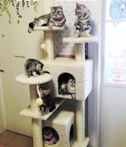 特价大型多功能猫窝猫爬架猫树玩具猫抓板猫家具猫咪别墅多省包邮