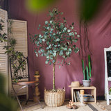 Simulation eucalyptus tree eucalyptus decoration large bonsai ground decoration green plant Nordic INS gift