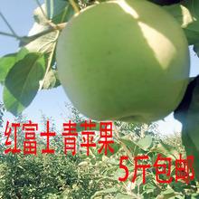新果现摘现发当季水果陕西青苹果5斤新鲜孕妇应季水果酸甜脆苹果