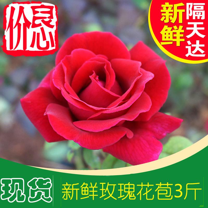 可食用做醋酵素纯露玫瑰花瓣花苞花蕾新鲜墨红玫瑰花3斤 供特百惠
