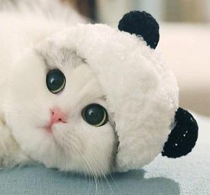 宠物帽子可爱熊猫造型变身装帽猫咪帽子头套头饰用品郭斯特同款