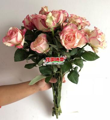 新品浓香花卉 多头玫瑰霓裳蔷薇 生日表白爱情礼物家用插花 速递