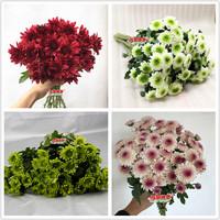 家庭办公室婚礼插花 超长花期雏菊 好养的多头小菊家族 鲜花批发