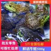500g牛蛙鲜活牛蛙活体 麻辣牛蛙肉 牛蛙鲜活 新鲜 牛蛙腿 可处理