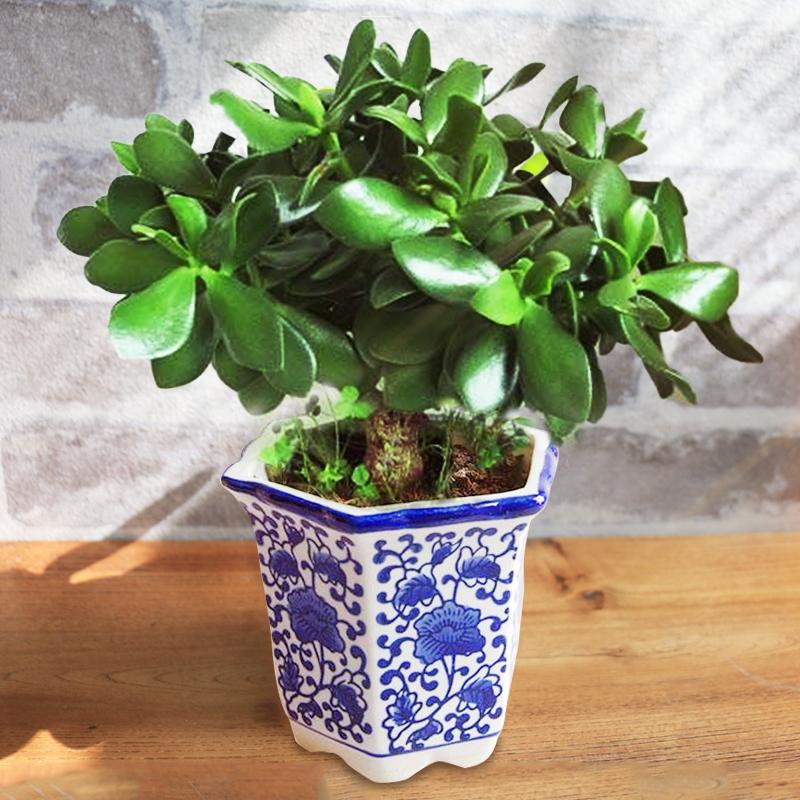 客厅树植物盆栽大