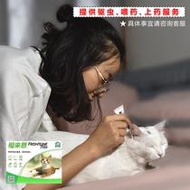 上门使用猫用福来恩给猫体外驱虫+电话咨询看详情