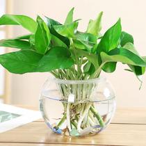创意摆件简约水培玻璃透明小花瓶水养绿萝植物花盆瓶子插花装饰