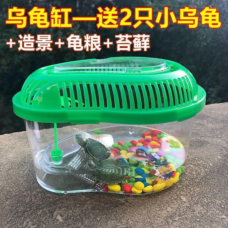 乌龟缸 送2只小乌龟龟乌龟缸带晒台多规格龟盆宠物盒儿童礼物