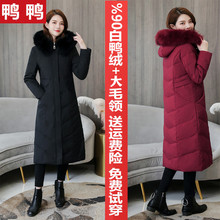 Duck and duck down jacket of middle and long style