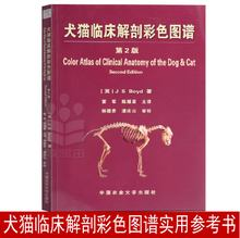 Years later, Dog and Cat Clinical Anatomy Color Atlas 2nd Edition Veterinary Books Daquan Dong Jun Chen Yaoxing Translated Small Animal Internal Medicine Professional Veterinary Books Animal Medicine Textbooks Pet Doctor Tool Books Cat and Dog Diagnostic Medicine