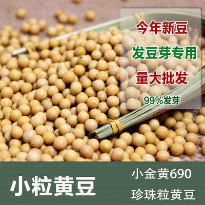 东北小粒黄豆500g 极小粒珍珠豆老品种大豆纳豆发豆芽豆小金黄690