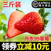 牛奶草莓包邮