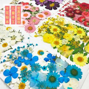 幼儿园手工贴画干花压花DIY写真贴脸装 饰干花妆 真树叶植物标本