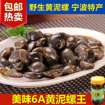 6A Yellow mud screw King drunken mud snail no sand large wild mud snail drunk snail ningbo seafood specialty pickled Seafood