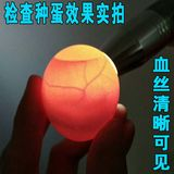 Multi-function egg LD egg keeper Egg Detector Egg inspection tool