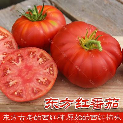 农家古老番茄种子东方红西红柿种籽洋柿子四季播春夏秋冬太空巨型