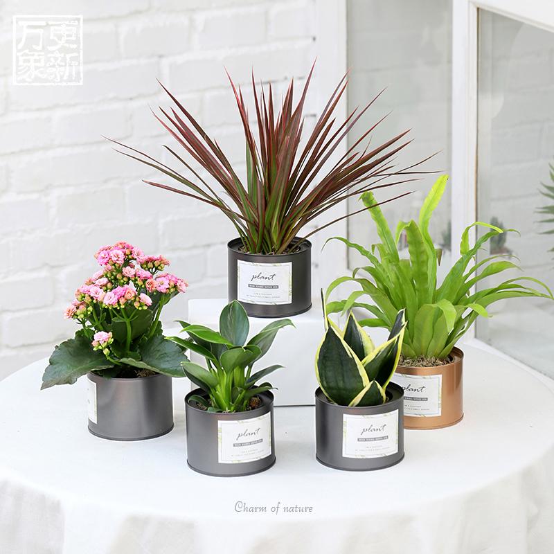 绿萝吊兰花卉盆栽发财树盆栽植物室内长寿花多肉植物办公室金钱树图片