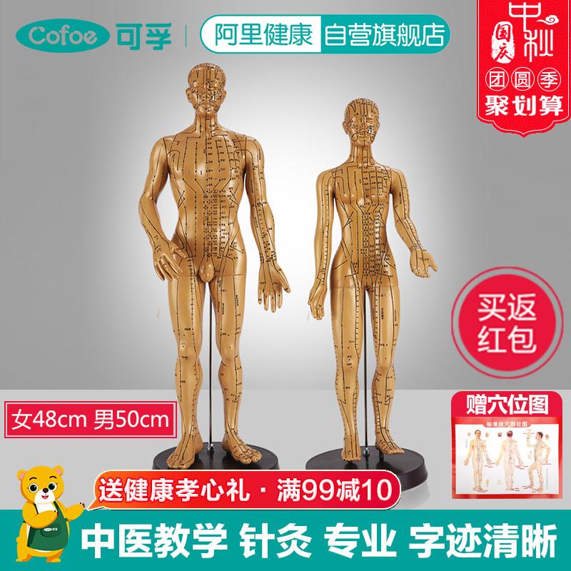 中医穴位模型