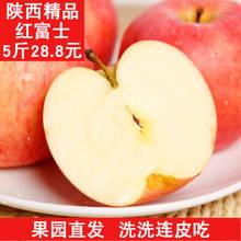 高山红富士苹果纯天然脆甜非陕西洛川农家特产新鲜水果五斤中果