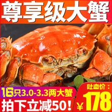 【抢16只】今旺六月黄大闸蟹现货螃蟹海鲜 水产鲜活特大全公母蟹