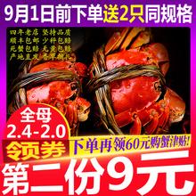 2.0两 只香草捆扎 预售八将军大闸蟹鲜活螃蟹全母蟹河蟹实规格2.4