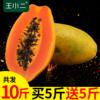 海南三亚红心木瓜