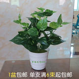 Potted ornaments of pseudo-green lotus green plant decoration indoor living room flower art bonsai pseudo-green lotus potted ornaments