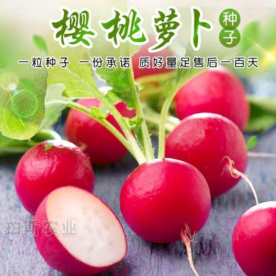 寿光蔬菜种子 樱桃萝卜迷你白皮珍珠水果小萝卜籽阳台盆栽包邮