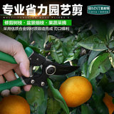 Germany, the United States, gardening scissors, household pruning branches, green plants, flowers, scissors, garden scissors, tools