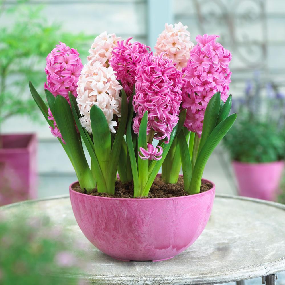 Цветочные луковицы Артикул 597273608196