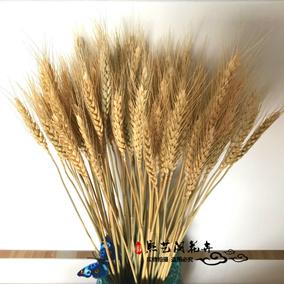 天然麦穗干花花束开业大麦田园装饰礼品拍摄道具稻穗干花真花包邮