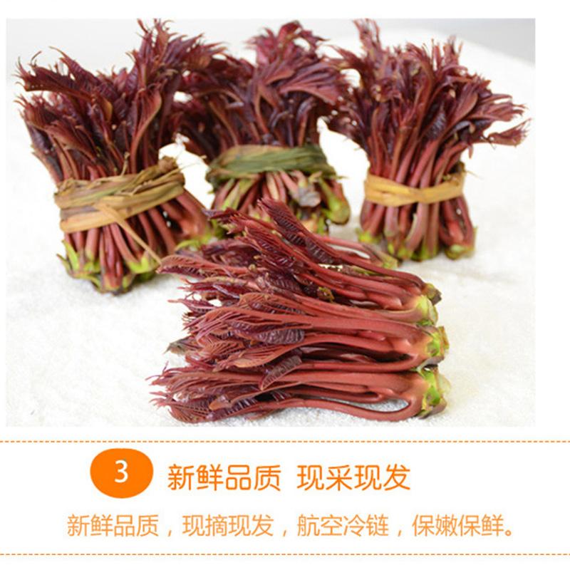 现货速发露天头茬红香椿芽2斤航空露天香椿芽新鲜香椿 野菜现摘