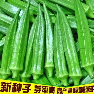 秋葵种籽种苗高产黄秋葵种子大田绿秋葵种耐热春季四季蔬菜种孑